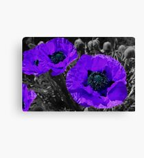 Purple coloursplash poppies Canvas Print