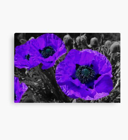 Purple coloursplash poppies Canvas Print
