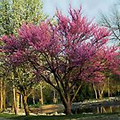 Springtime In The Park (read poem) by Marie Sharp