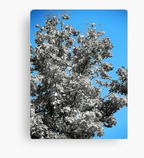 Fall in selective color ( Exitium....bring us peace ) Canvas Print