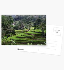 A Balinese Rice Field Postcards