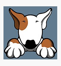 I Want Something Bull Terrier Brown & White Photographic Print