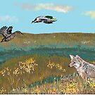 Coyote Waits by Carole Boyd