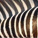 Stripes!! by Anthony Goldman