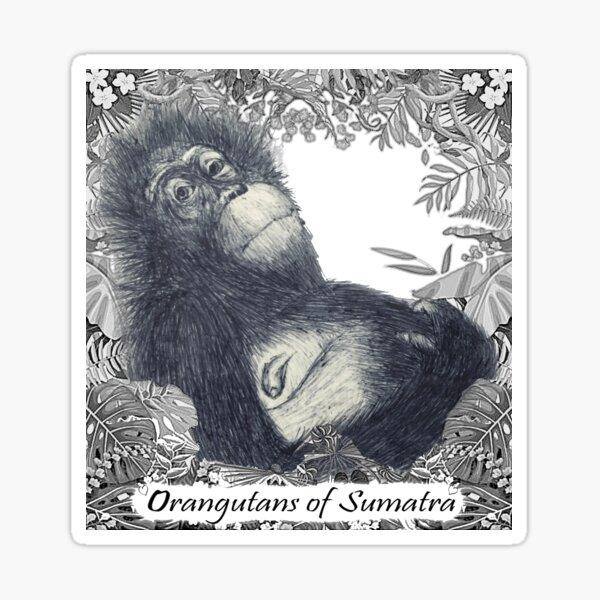 Orangutans of Sumatra Sticker
