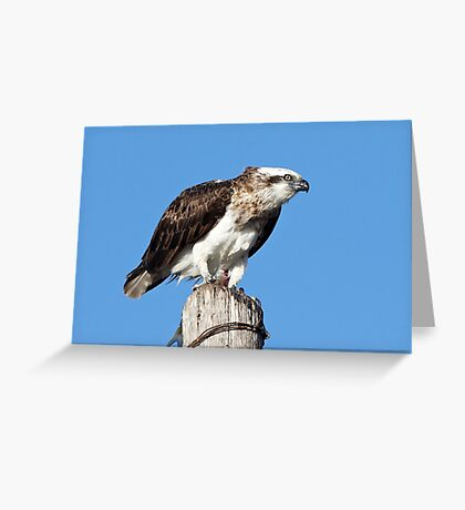 Osprey ~ Table for One Greeting Card