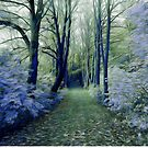 The Enchanted Wood by Chris Armytage™