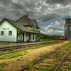 Bellis  by Robert Meyer