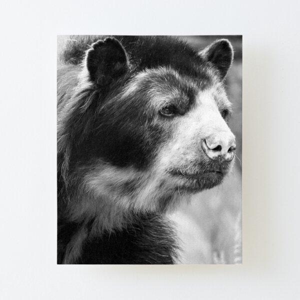 Bear Canvas Mounted Print
