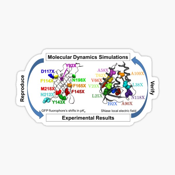 Molecular Dynamics Simulation Sticker