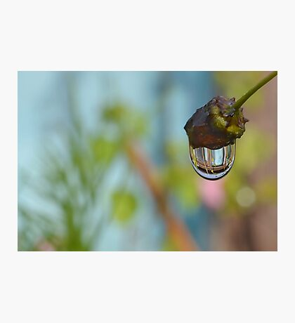Shed in a Drip Photographic Print