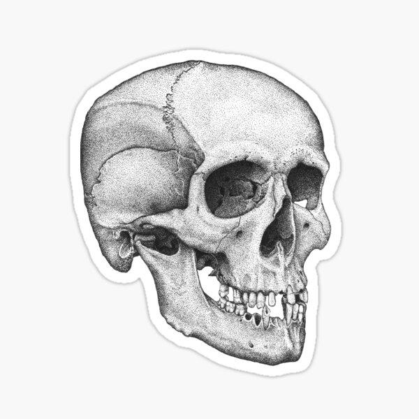 Human Male Skull Sticker