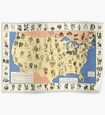 1932 Medicinal Plant Map of the United States. Amazing map of 'Herbal Cures' Poster