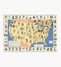 1932 Medicinal Plant Map of the United States. Amazing map of 'Herbal Cures' Photographic Print