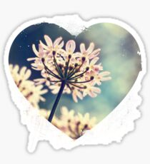 Queen Annes Lace flowers Sticker