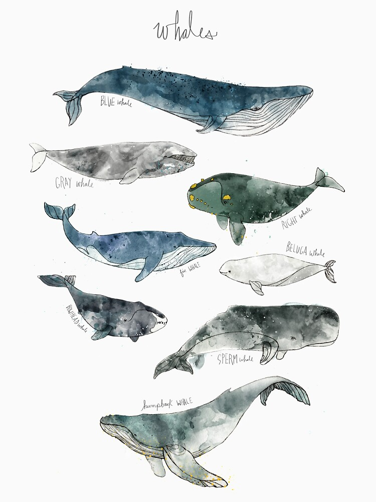Whales by AmyHamilton