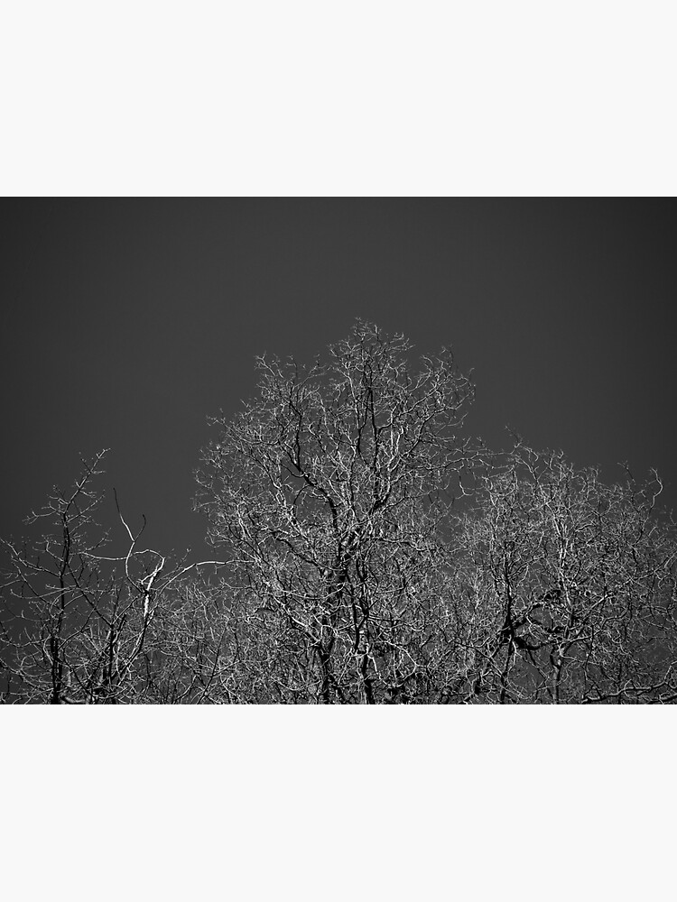 Trees and Sky by douglasewelch