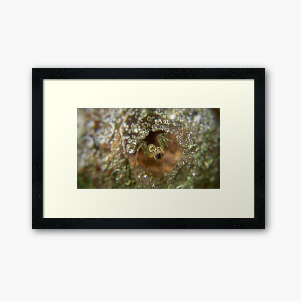 Spider in his crystal palace  Framed Art Print