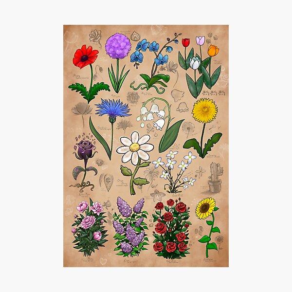 Flowers of Minecraft Botanical Illustrations Photographic Print