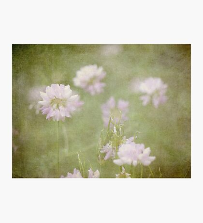 Dreamy Summer' Song Photographic Print