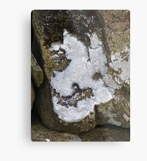 The Lichen of the Baskervilles Metal Print