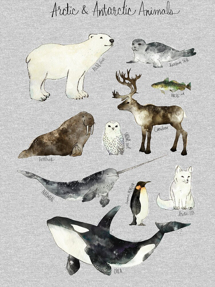 Arctic & Antarctic Animals by AmyHamilton