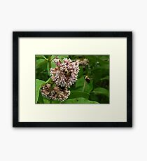 Bees, Please! Framed Print