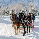 Winter's Wonderland by Laddie Halupa
