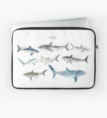 Sharks Laptop Sleeve