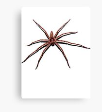 Giant Spider Canvas Print
