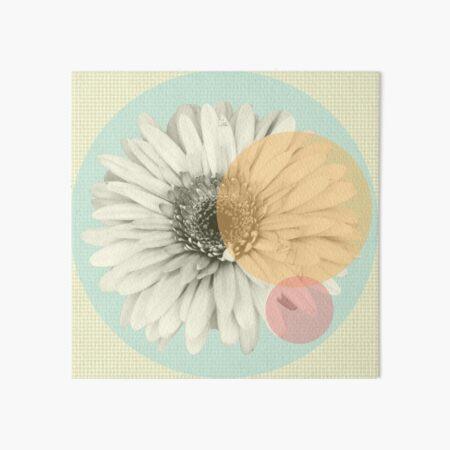 Gerbera mit Pastell Kreisen  Galeriedruck