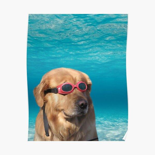 Swimmer Dog Poster Poster