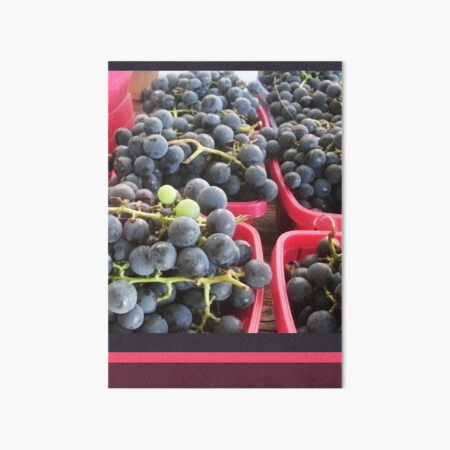 Purple Grapes with Pink Stripes, Colorful Nature Photography by Courtney Hatcher Art Board Print