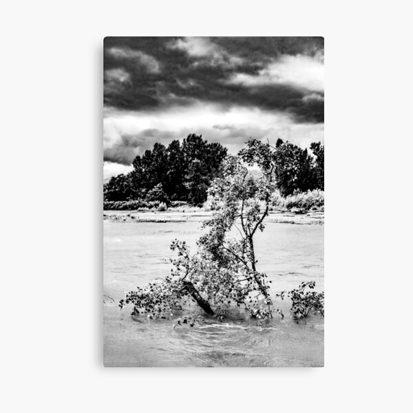 Tree flooded by Chilliwack River Canvas Print