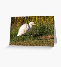 Intermediate Egret  Greeting Card