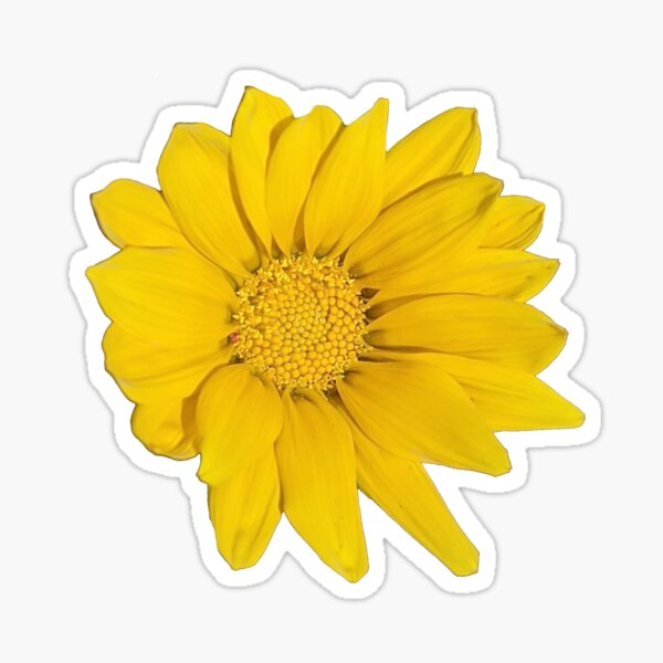 Heliopsis Hellianthoides (Smooth Oxeye) Sticker