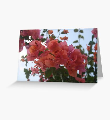Bougainvillea At Daybreak Greeting Card