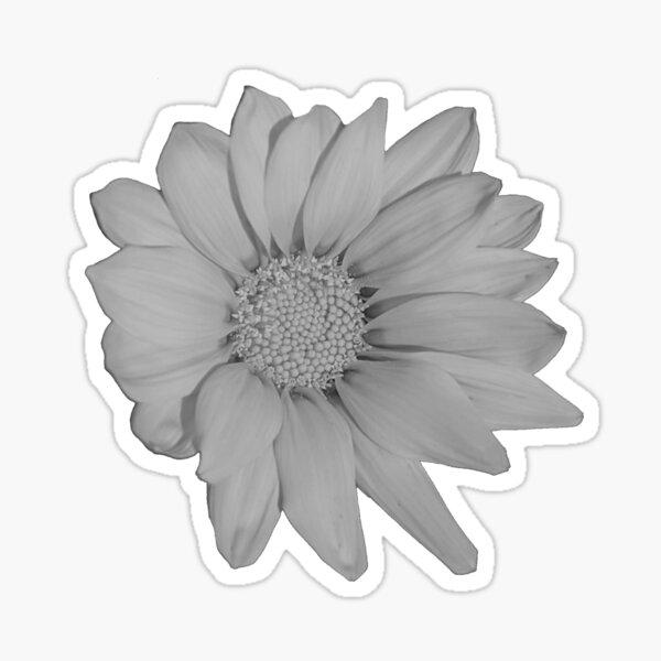Heliopsis Hellianthoides (Smooth Oxeye) Vanilla Sticker