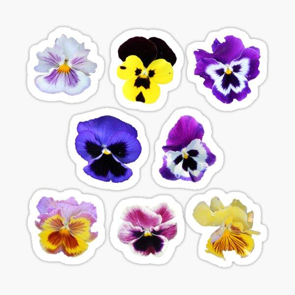 Pansy Mixture on Violet Sticker