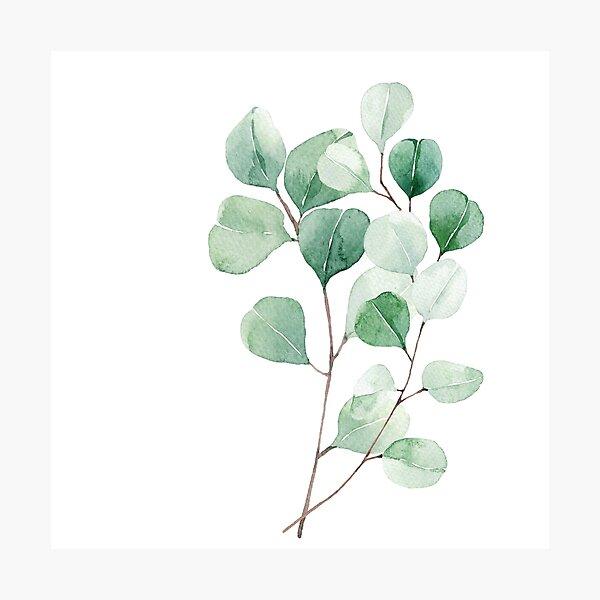 Eucalyptus in watercolor print  Photographic Print
