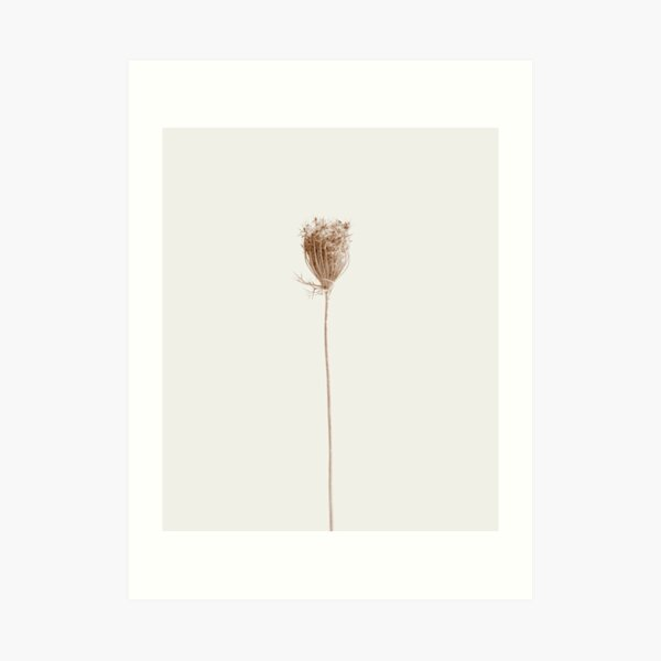 Queen Anne's lace, dry plant Art Print