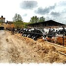 Cows in the barn by Giuseppe Cocco