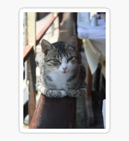 Cute Tabby Cat - Sitting On The Fence Sticker