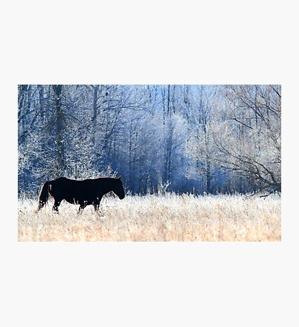Horse and Owl Photographic Print