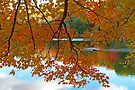 Fall in Quebec by Jim Cumming