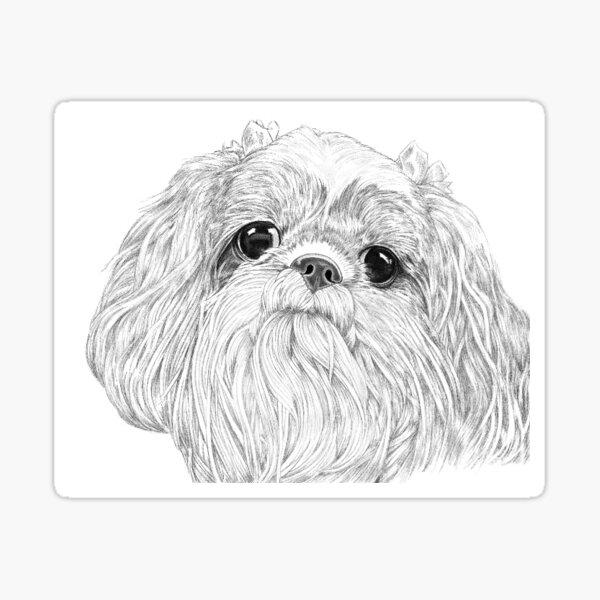 Puppy Eyes – Shih Tzu Sticker