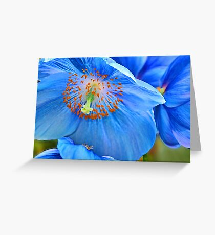 Blue Himalaya Poppy Greeting Card