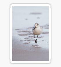 Sanderling Sticker