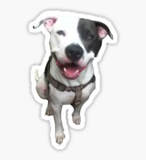 The Smiling Pit Kater Sticker