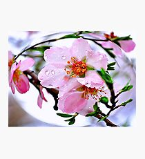 Almond dew  Photographic Print